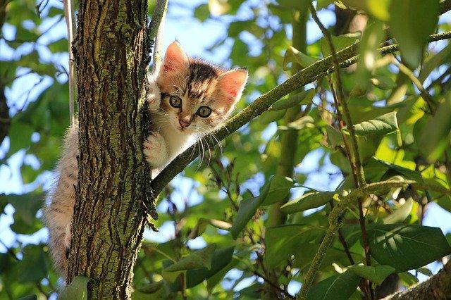 rascadores para gatos por forma